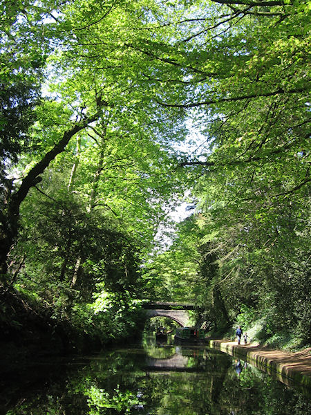 Canal passing through woodland