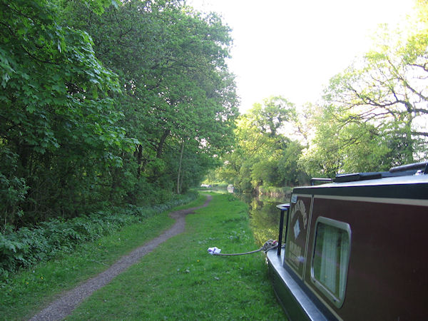 Narrowboat moored in wooded stretch of canal